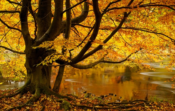 Picture autumn, leaves, river, tree, England, England, North Yorkshire, Yorkshire Dales, North Yorkshire, The Yorkshire Dales, …