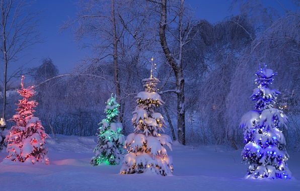 Picture winter, frost, snow, trees, blue, yellow, red, lights, tree, tree, spruce, the evening, Canada, green, …