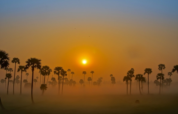 Picture the sky, the sun, fog, palm trees, dawn