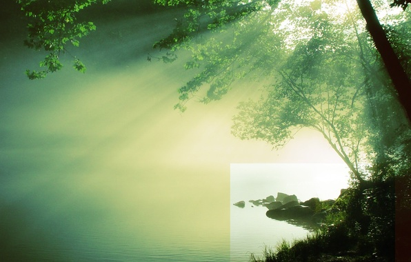 Picture water, the sun, river, tree