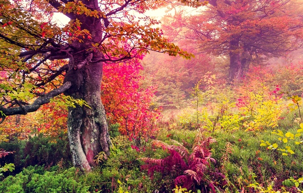 Picture autumn, forest, leaves, trees, landscape, forest, autumn, leaves, tree, fall