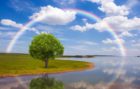 Picture field, nature, river, tree, rainbow