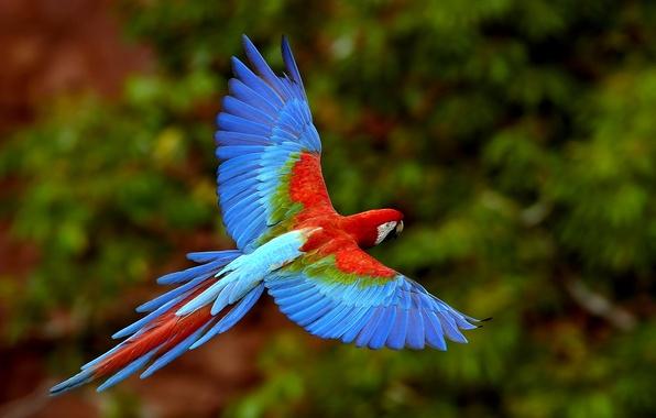 Picture birds, bright, color, parrot