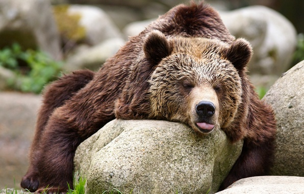Picture stones, relax, bear, the Bruins
