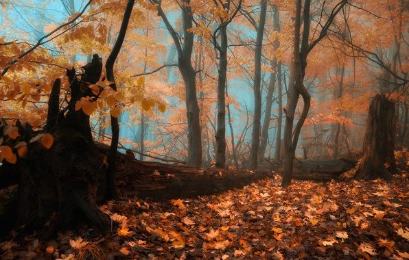 Picture autumn, forest, fog, forest, falling leaves, Autumn