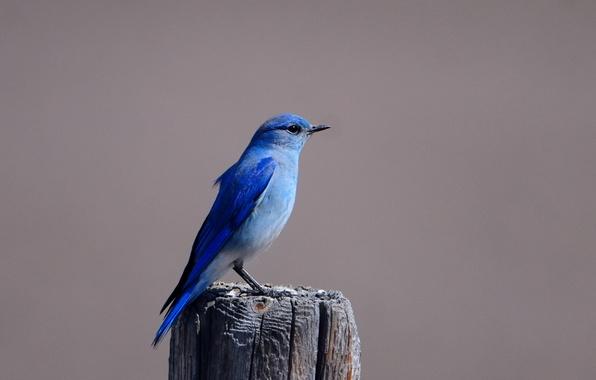 Picture Bird, stump, bird, blue