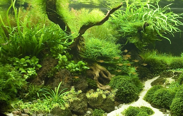 Picture fish, aquarium, plants
