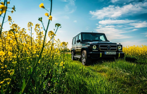 Picture Mercedes-Benz, Car, Sky, Grass, Front, Flowers, AMG, Black, Sun, Summer, G63