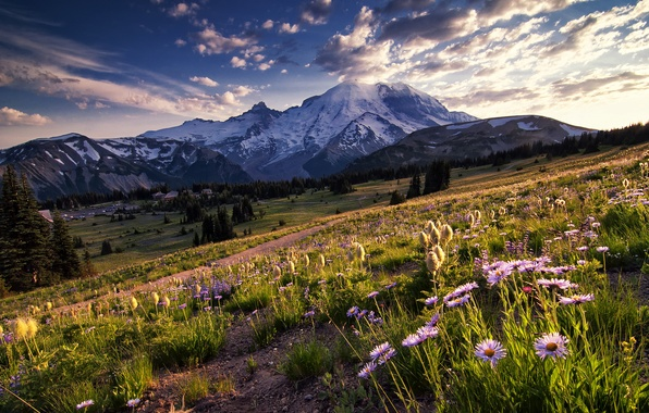 Picture the sky, clouds, trees, flowers, mountains, glade, the evening, Washington, USA, national Park, sunlight