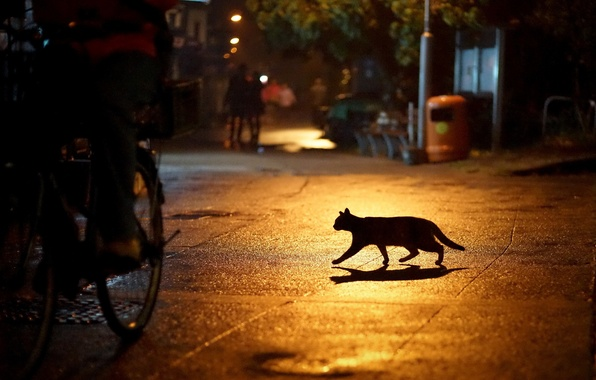 Picture cat, night, the city, lights, street, silhouette