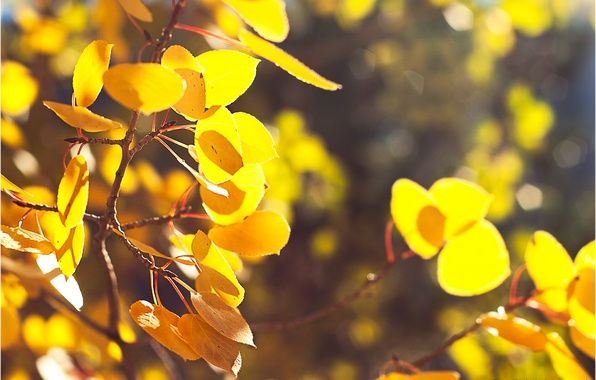 Picture autumn, leaves, branches, nature, bokeh, yellow foliage