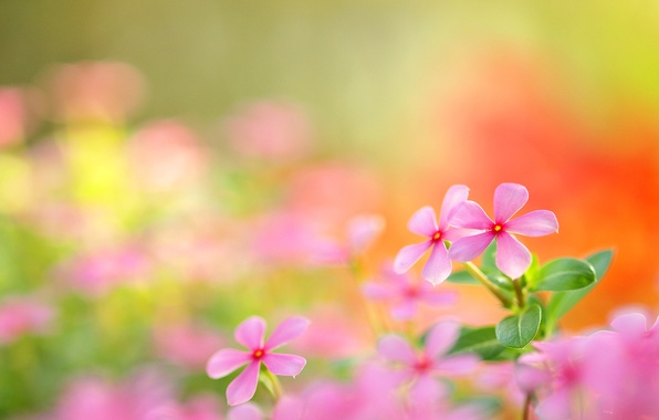 Picture field, nature, petals, meadow, inflorescence