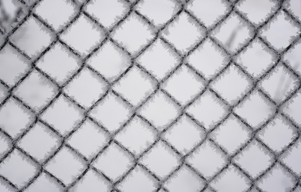 Picture winter, blue, mesh, the fence, wire