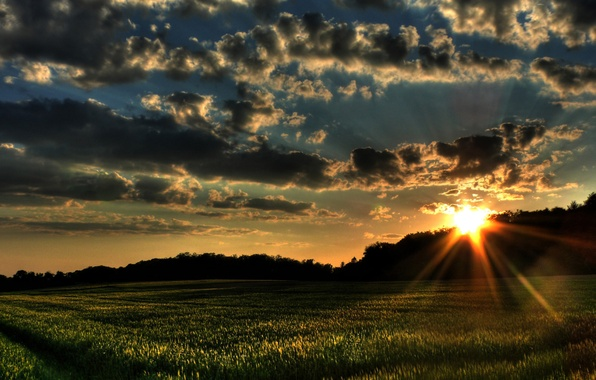 Picture field, forest, summer, the sky, clouds, sunset, photo, dawn