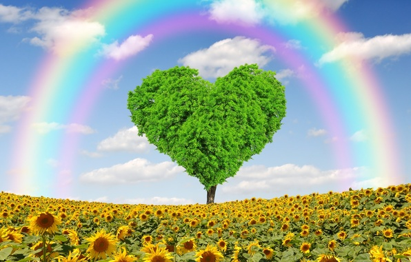 Picture field, sunflowers, tree, heart, spring, rainbow, love, field, heart, tree, spring, meadow