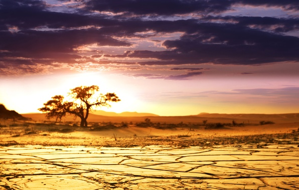 Picture sand, the sky, clouds, landscape, tree, dawn, beauty, horizon, Savannah, Africa, Sunrise, African landscape