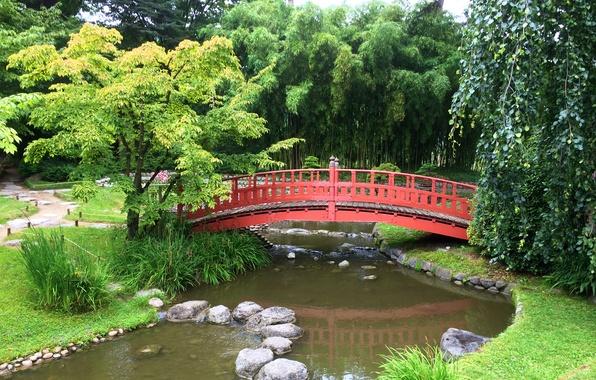 Picture trees, bridge, pond, stones, France, Paris, garden, Japanese garden, Albert-Kahn