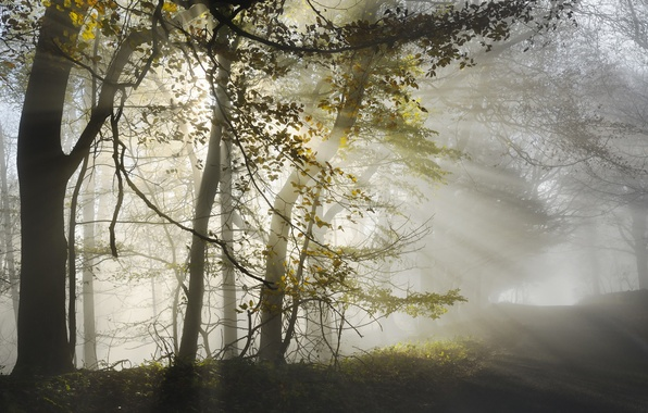 Picture road, forest, light, morning