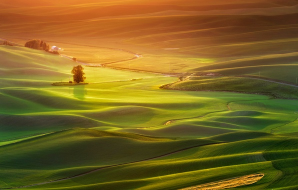 Picture field, grass, trees, sunset, house, hills