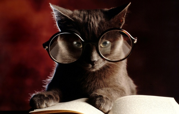 Picture cat, kitty, glasses, book