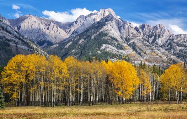 Picture autumn, the sky, leaves, trees, mountains, Colorado, USA, aspen, Aspen