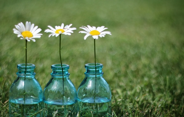Picture greens, grass, flowers, background, widescreen, Wallpaper, chamomile, Daisy, meadow, jars, wallpaper, flowers, widescreen, background, full …