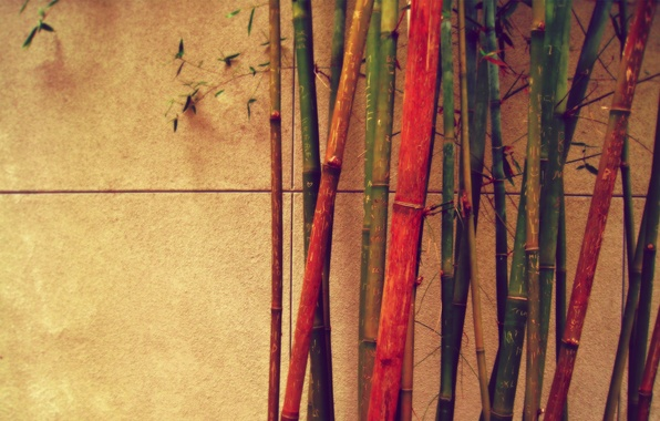 Picture wall, bamboo, different, color