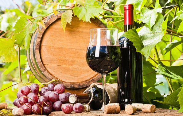 Picture leaves, wine, grapes, tube, barrel