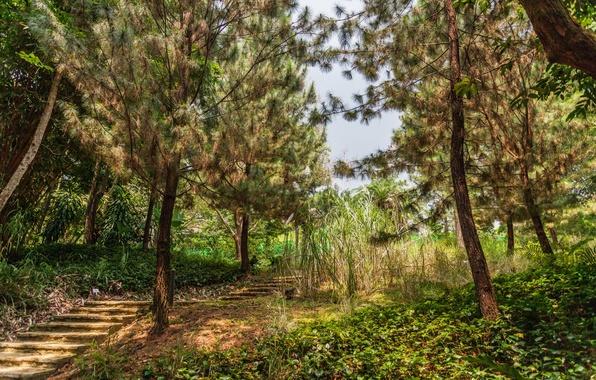 Picture trees, garden, ladder, Singapore, steps, Botanic Gardens