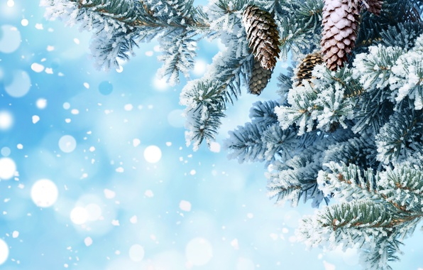 Picture snow, needles, branches, background, tree, New year, bumps