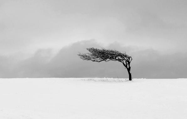 Picture winter, field, landscape, tree