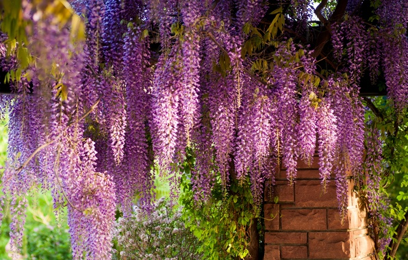 Picture bricks, Wisteria, Wisteria