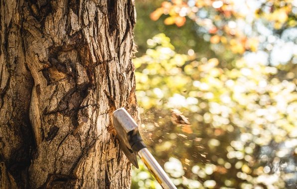 Picture forest, tree, trunk, axe, chips, fly, cut