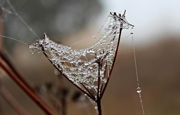 Picture drops, a blade of grass, gossamer, Dewdrop