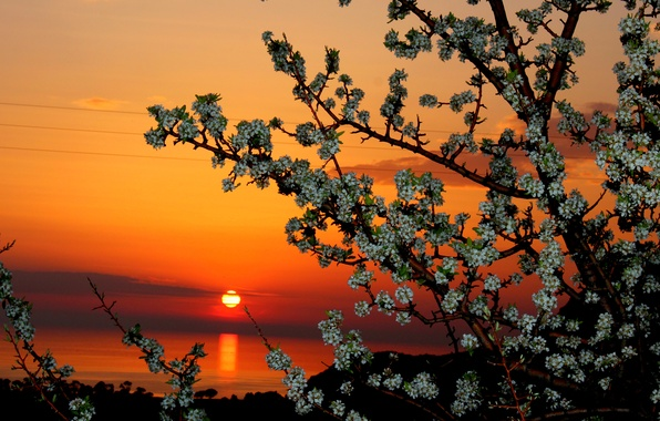 Picture the sky, the sun, clouds, sunset, flowers, tree