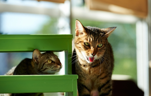 Picture language, face, the sun, cats, green, house, Kote, funny, stool
