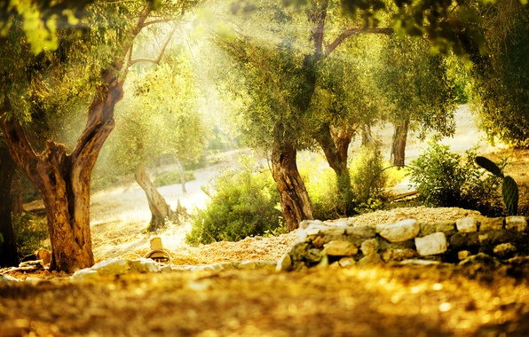 Picture summer, the sun, rays, trees, nature, Park, green, vegetation, summer, Nature, trees, green, view, sunny …