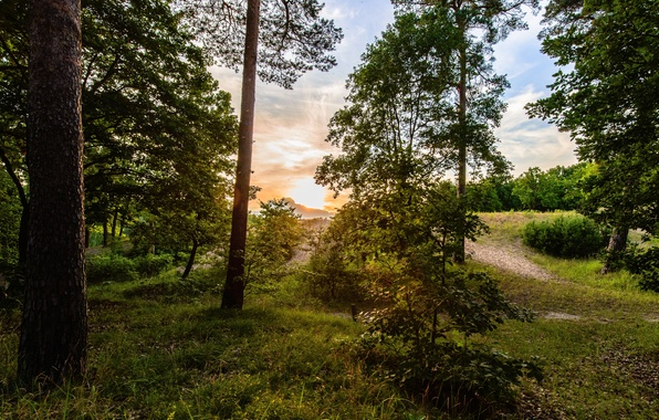 Picture forest, the sky, grass, the sun, clouds, trees, sunrise, foliage, path