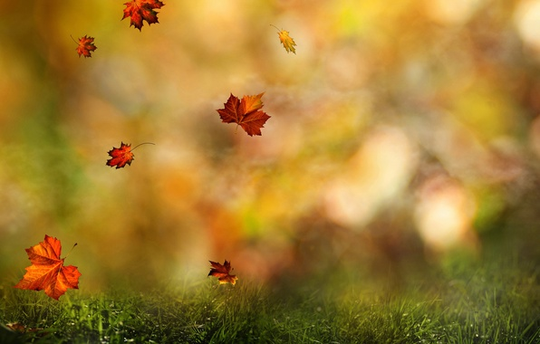Photo wallpaper autumn, forest, grass, leaves, color, drops, macro, nature, Rosa, blur, water, nature, bokeh, autumn, autumn, ...