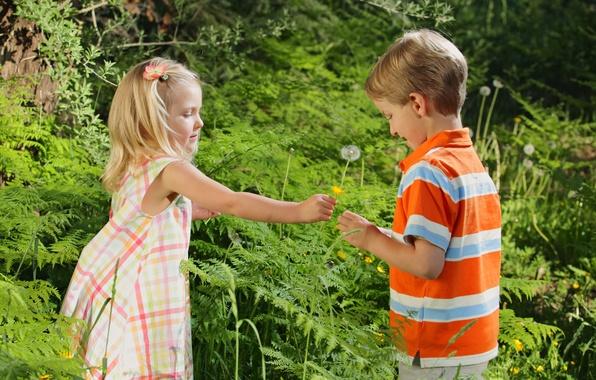 Picture flower, grass, love, children, childhood, romance, rose, child, boy, pair, girl, love, rose, grass, flower, …