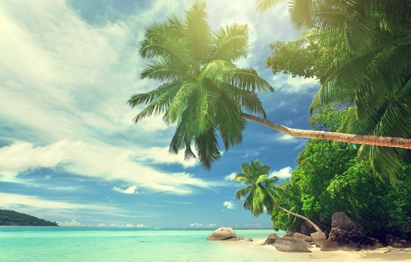 Picture beach, summer, the sky, clouds, nature, tropics, stones, palm trees, the ocean, Paradise, beautiful, beach, …