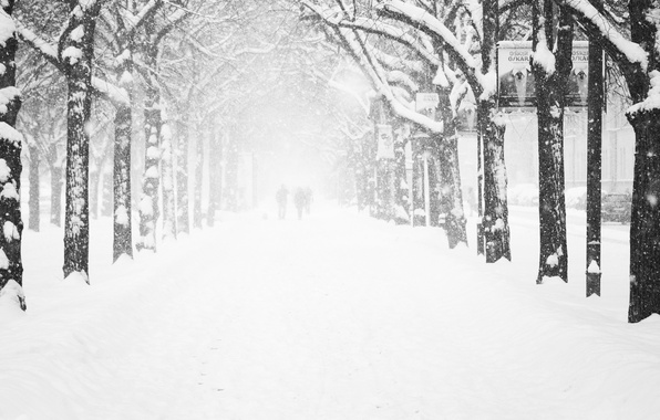 Picture cold, winter, frost, road, women, girl, trees, snowflakes, people, city, girls, tree, street, woman, people, …
