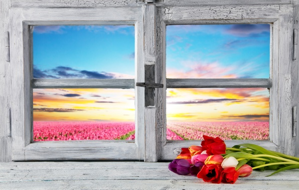 Picture field, the sky, flowers, dawn, view, horizon, window, tulips, sill