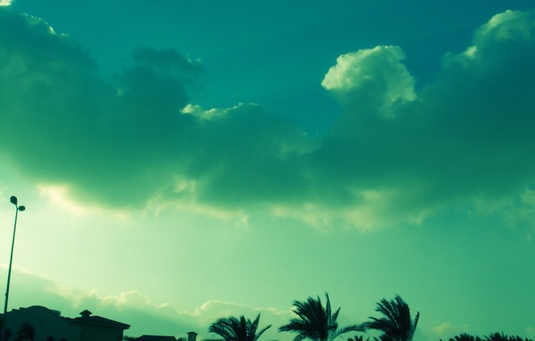Picture the sky, clouds, green, palm trees, color