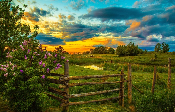 Picture the sky, grass, clouds, trees, sunset, pond, the fence, horse, the bushes, lawn, lilac