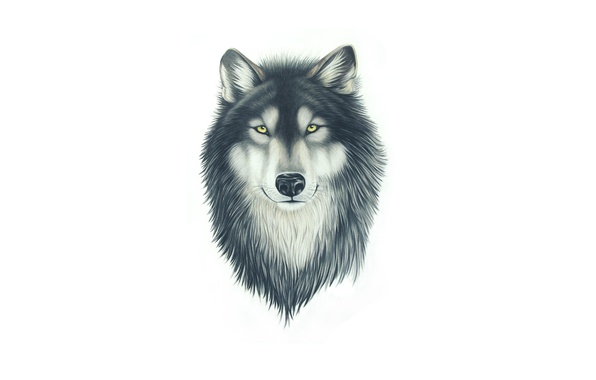 Picture face, wolf, dog, head, painting, wolf
