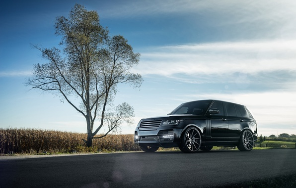 Picture car, tree, SUV, range rover