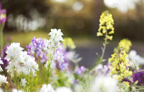Picture grass, light, flowers, nature, glare, glade, plants, spring, yellow, blur, light, white, flowering, flowers, lilac