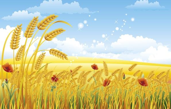 Picture wheat, summer, clouds, Maki