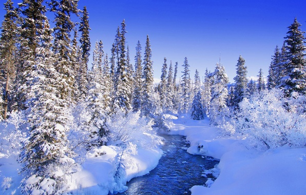 Picture forest, winter, fabulous